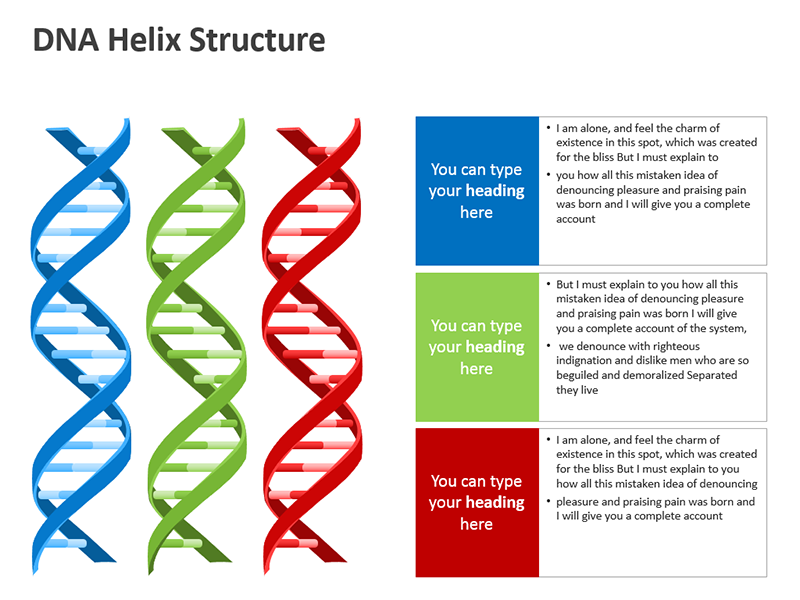 DNA Model - Vector Graphics