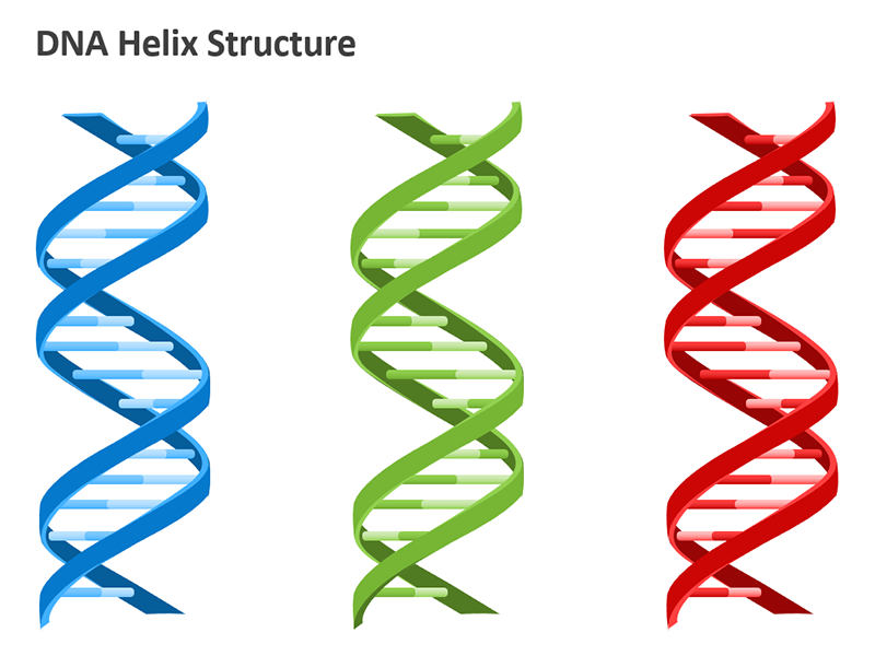 DNA Diagram PowerPoint Images