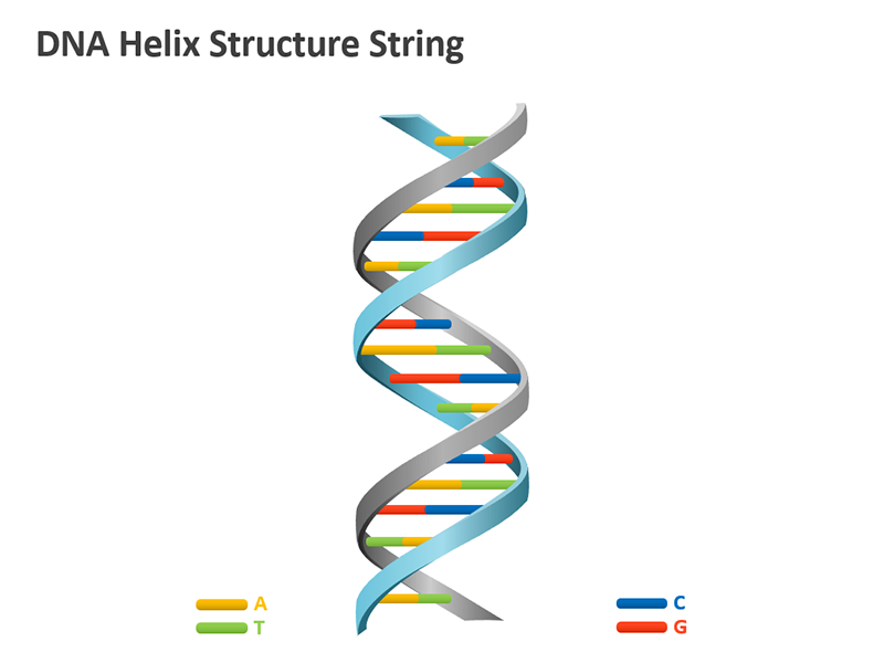DNA Double Helix Model PowerPoint Graphic