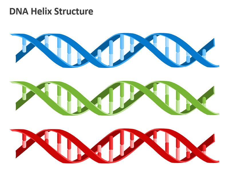 Double Helix Bonds PowerPoint Shapes