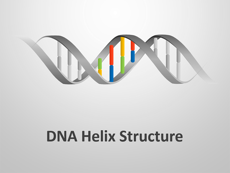 PowerPoint Presentation on Business DNA Helix Structure