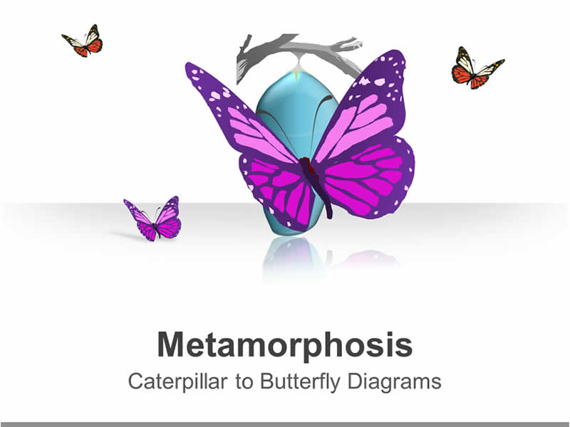 Editable PPT Presentation on Life Cycle of a butterfly