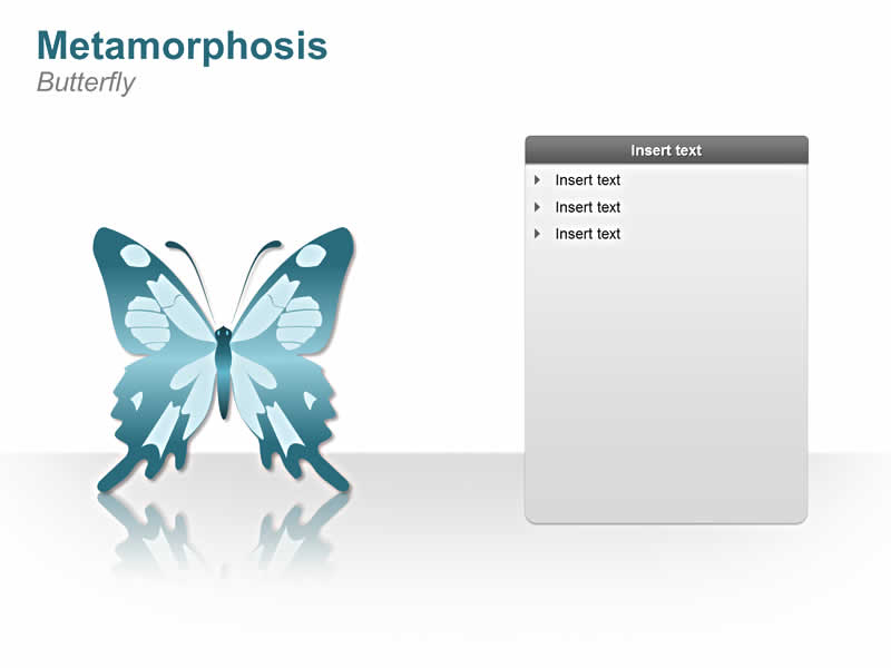 PPT Slide on Metamorphosis - Butterfly