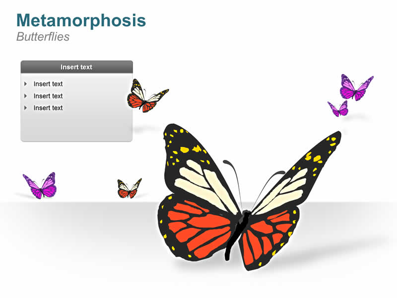 PowerPoint Slides of Butterflies Images