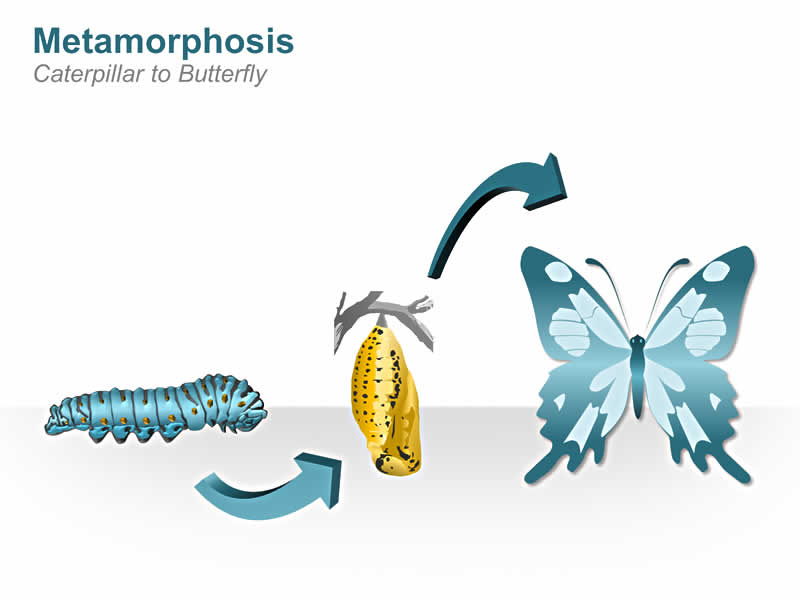 Metamorphosis Caterpillar to Butterfly PowerPoint Slide