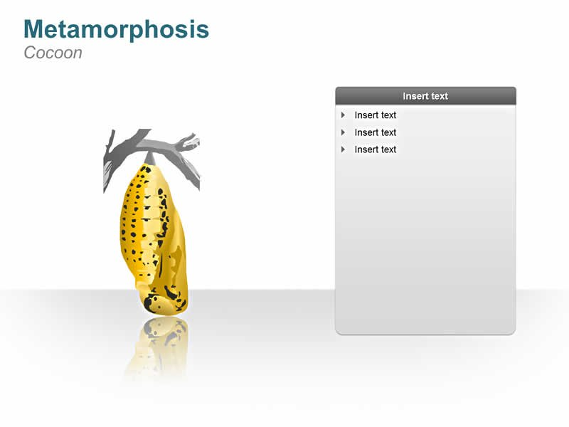 PowerPoint Images of Metamorphosis - Cocoon