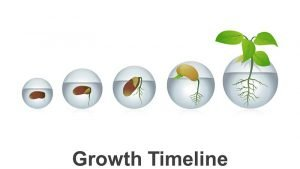 Growth Timeline PowerPoint Presentation